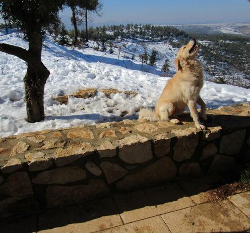 הכלב מק מזבוט חלאס מהנוף בביריה