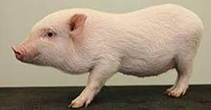 הדמוקרטיה היא שלטוו ביחזירון העליון, על ידי החזירון העליון ולמען החזירון העליון